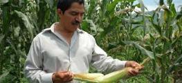 Mexican Corn Farmer
