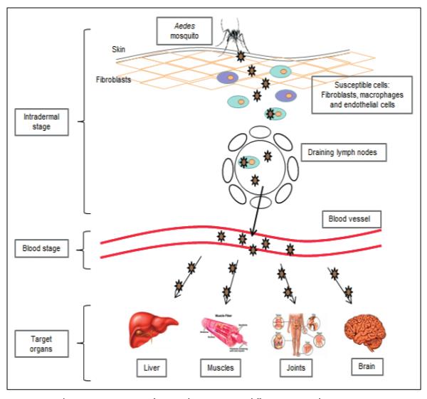 Chikungunya Virus Actions
